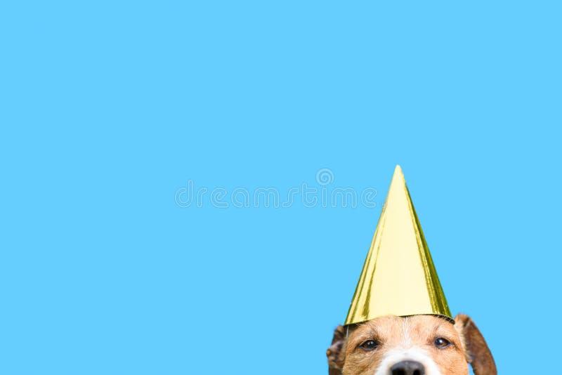 生日和庆祝概念与戴金黄党帽子的狗 免版税库存图片