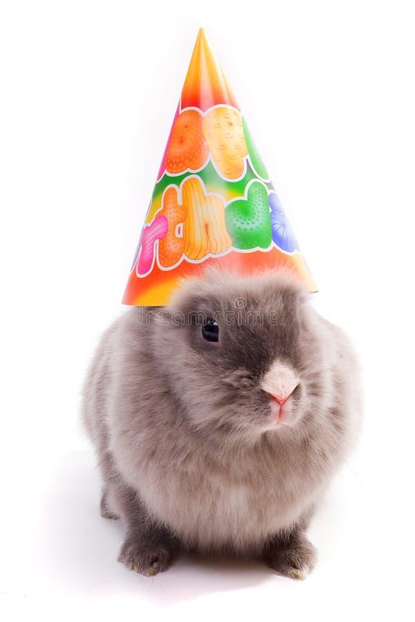生日愉快兔宝宝的盖帽 免版税库存照片