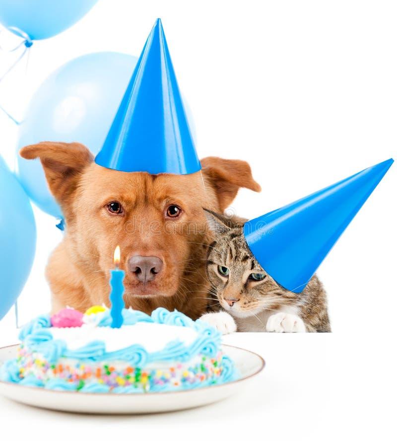 生日聚会宠物 免版税库存图片