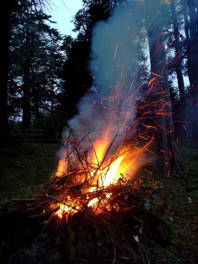 生机勃勃的篝火在森林 免版税库存照片