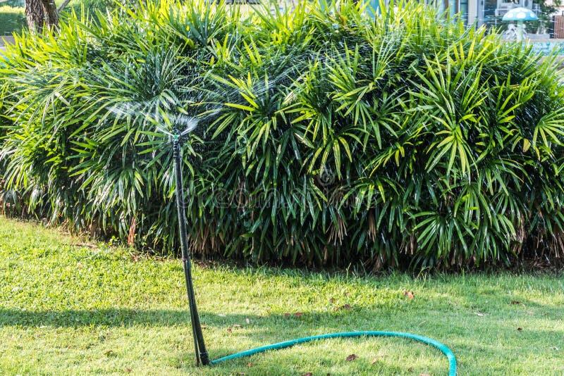 Download 水生植物在庭院里 库存照片. 图片 包括有 浇灌, 围场, 刷新, 绿色, 设备, 草坪, 增长, 庭院 - 72354174