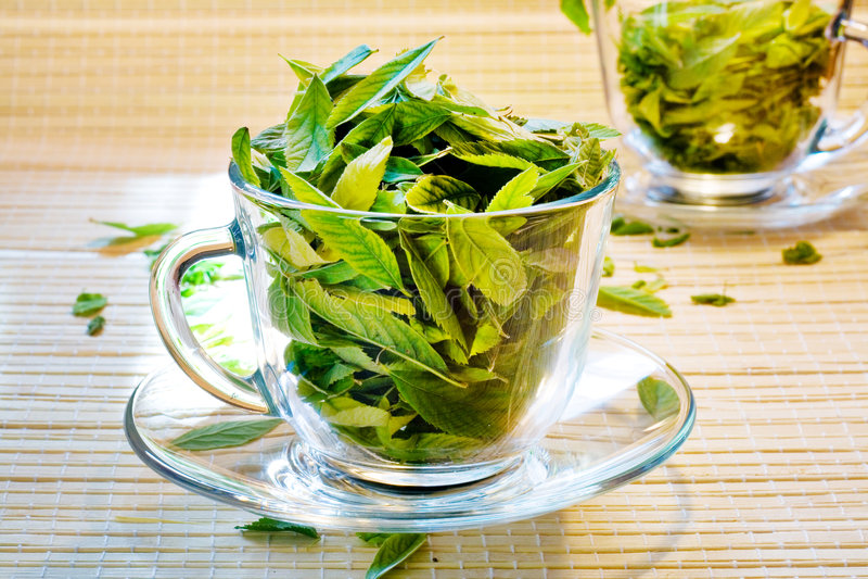 生气勃勃绿茶 免版税图库摄影