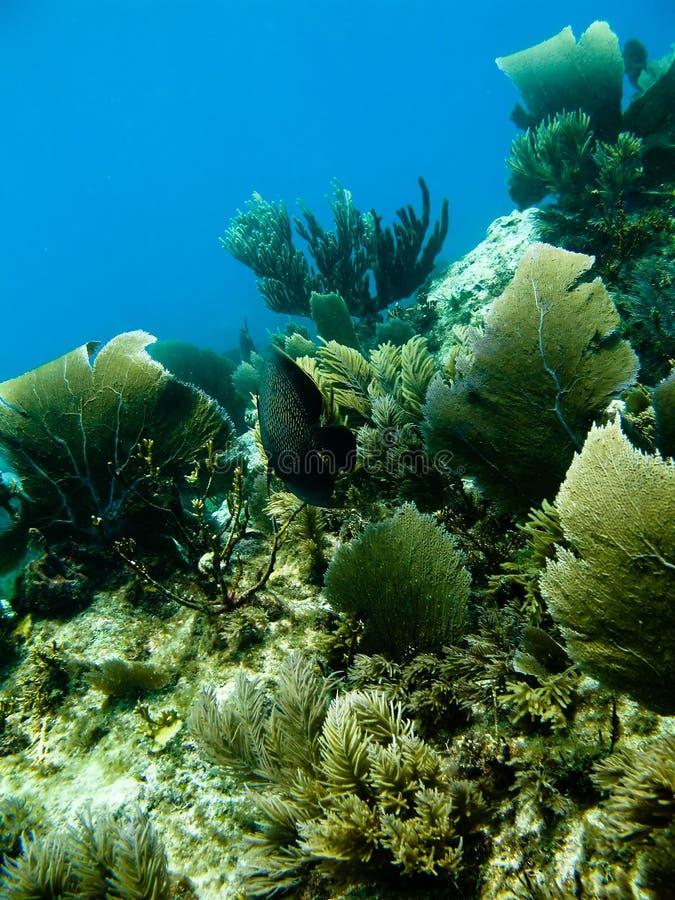 生活水下礁石的海运 免版税库存图片