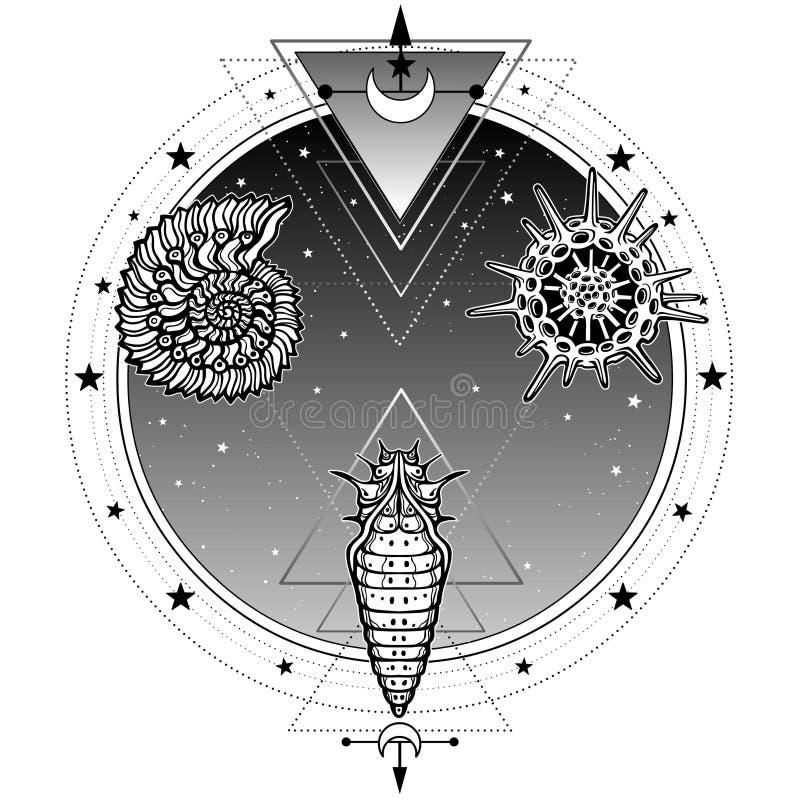 生活的起源:壳,放射虫,幼虫 背景-夜星天空的圈子 皇族释放例证