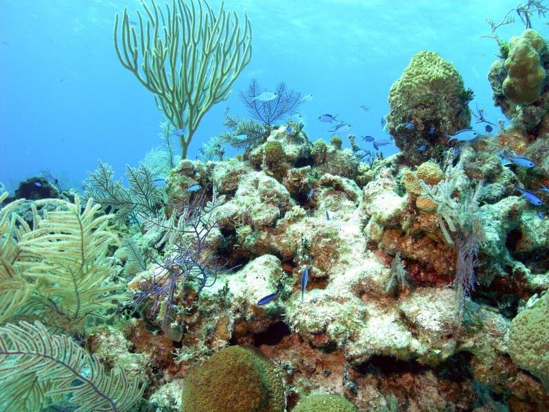 生活礁石 库存图片