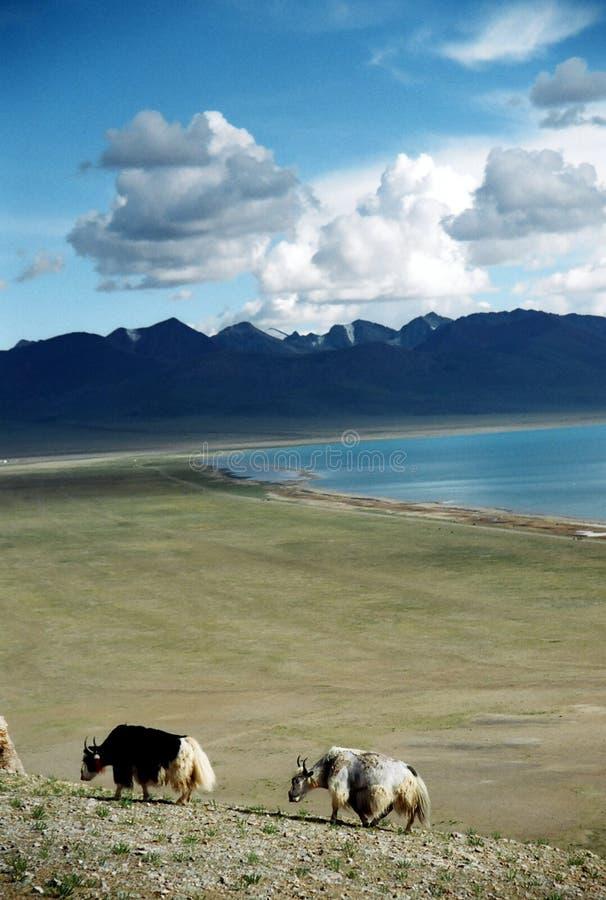 生活西藏 免版税库存图片