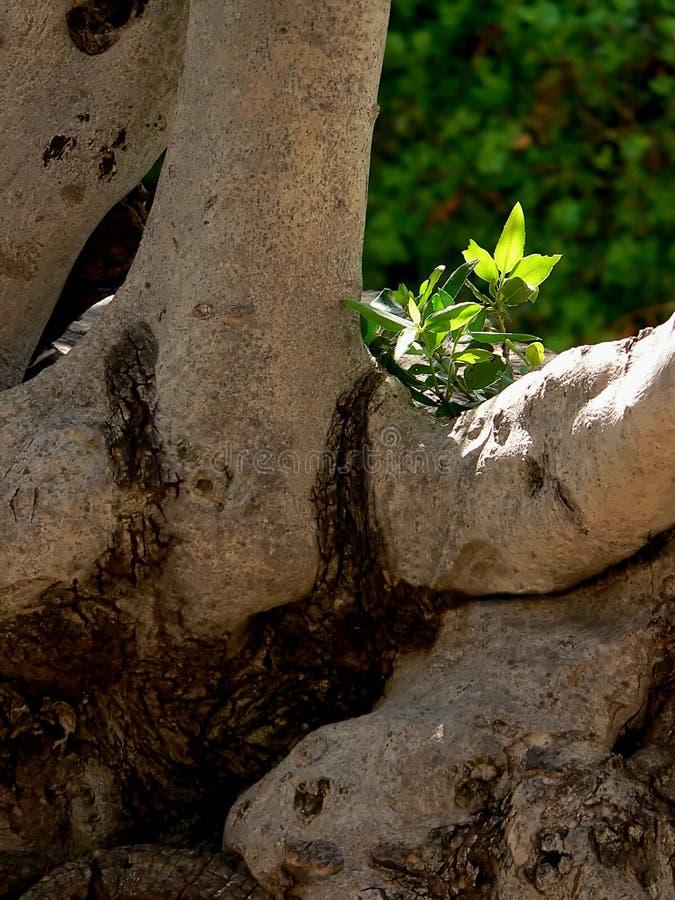 Download 生活 库存图片. 图片 包括有 居住, 绿叶, 希望, 改良, 结构树, 阳光, 生活, 死亡, 阴谋, 相当 - 189855