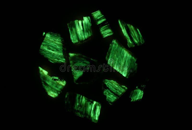 生物发光mycena绿色焕发  免版税库存图片