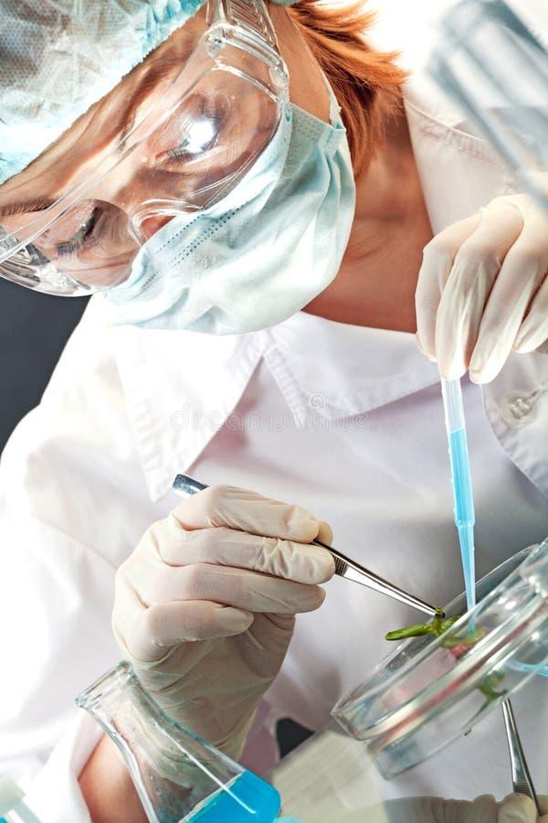 生物实验 库存图片