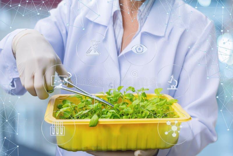 生物技术员与一起使用植物的样品 免版税库存照片