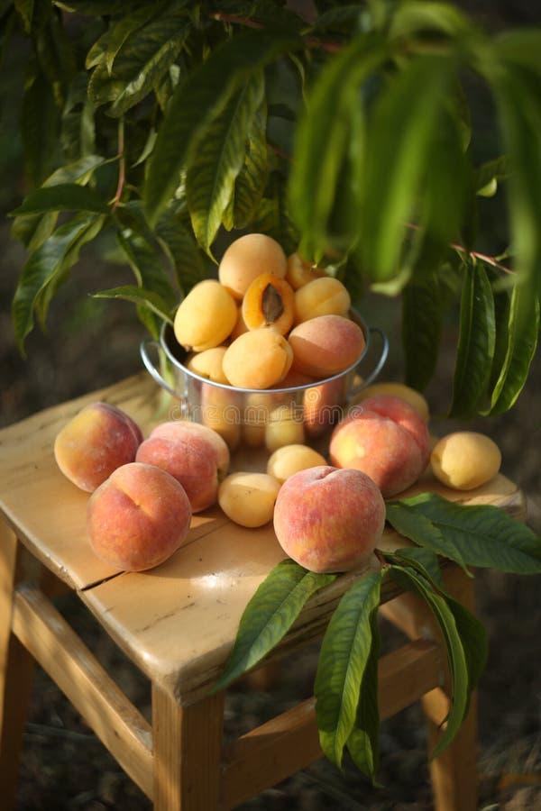 生物桃子和杏子在庭院里 图库摄影