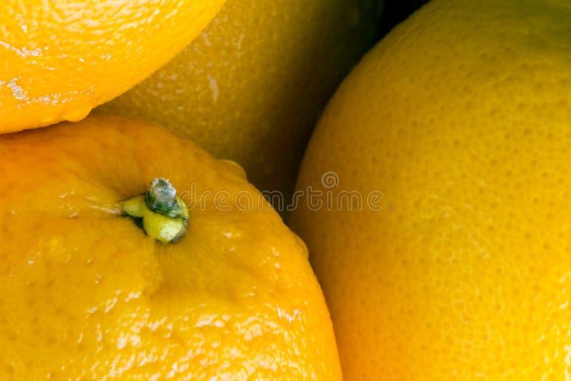 生物汁液的桔子 库存照片