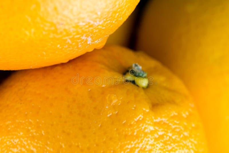 生物汁液的桔子 库存图片