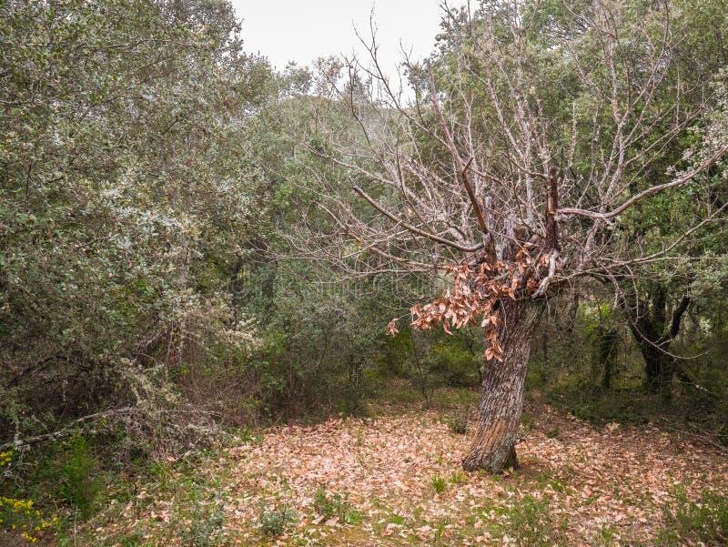 生物演化谱系图解与落叶叶子的 免版税库存照片