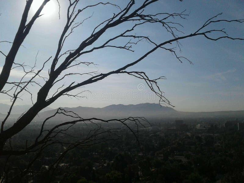 生物演化谱系图解在lol附近的唯一的死的树它一定偏僻 免版税图库摄影