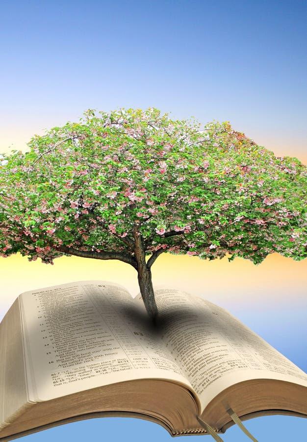 生物演化谱系图解圣经 免版税库存照片