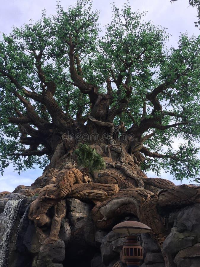 生物演化谱系图解在华特・迪士尼世界 免版税库存照片