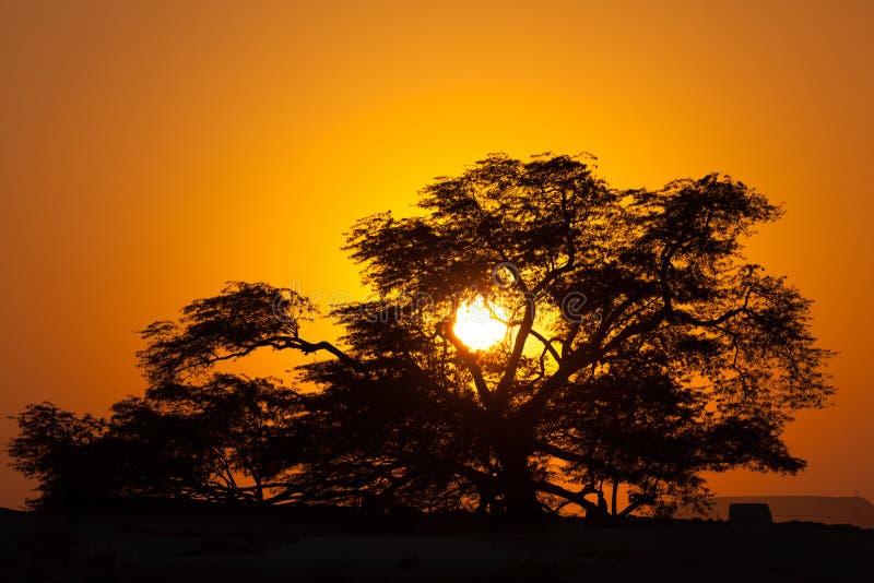 生物演化谱系图解在日落的,巴林 免版税库存图片