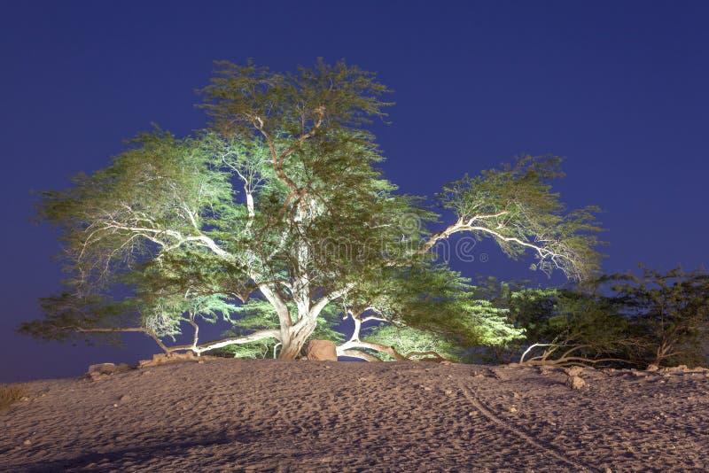 生物演化谱系图解在巴林 图库摄影