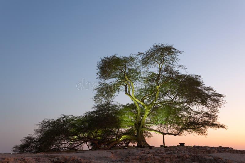 生物演化谱系图解,巴林 库存照片
