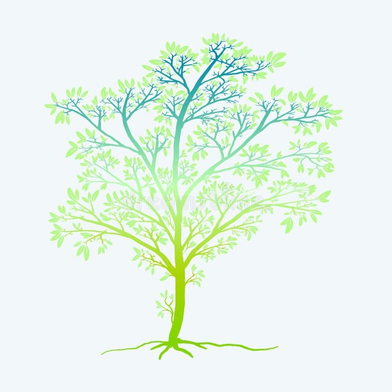 年轻生物演化谱系图解 库存例证