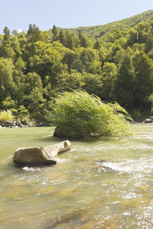 生物生物河,智利 库存照片