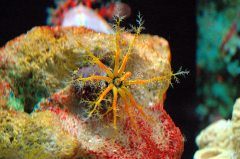 生物致命海运 库存照片