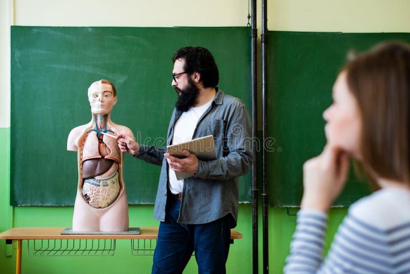 生物课的年轻男性西班牙老师,拿着数字式片剂和教人体解剖学,使用人为身体模型 库存图片