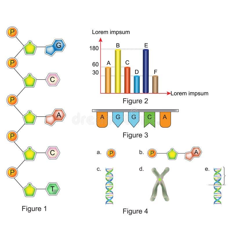 生物-问与答模板 向量例证