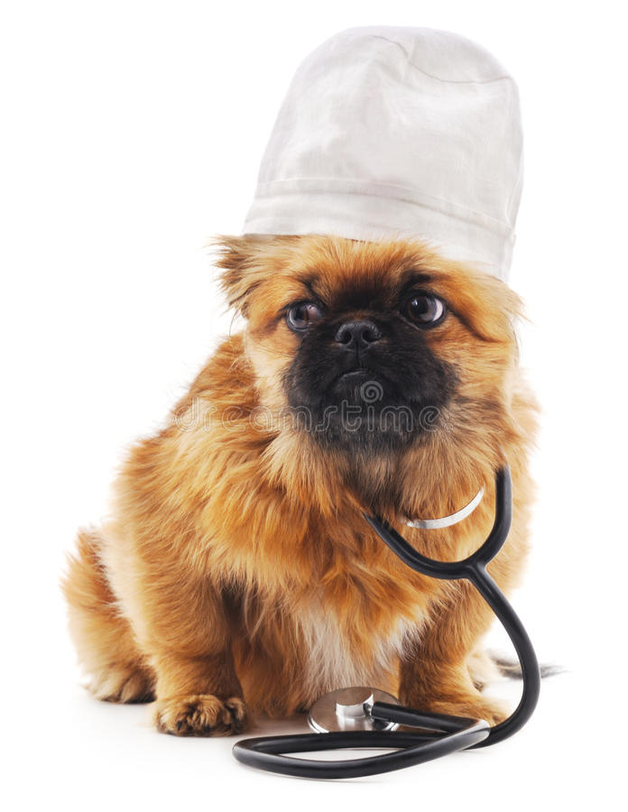医生狗穿戴了 库存图片