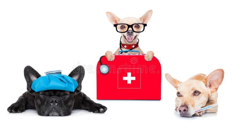 医生病和不适的狗 库存照片