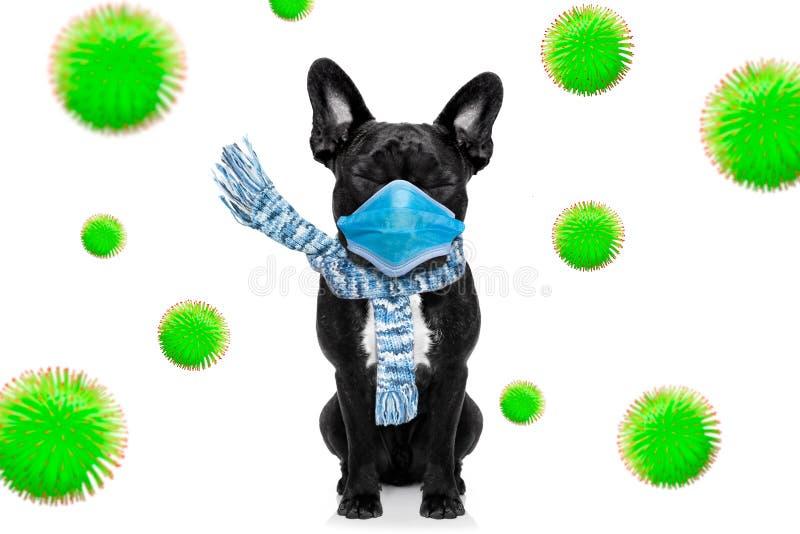 生病的狗,有病,有面罩,冠状病毒 库存照片