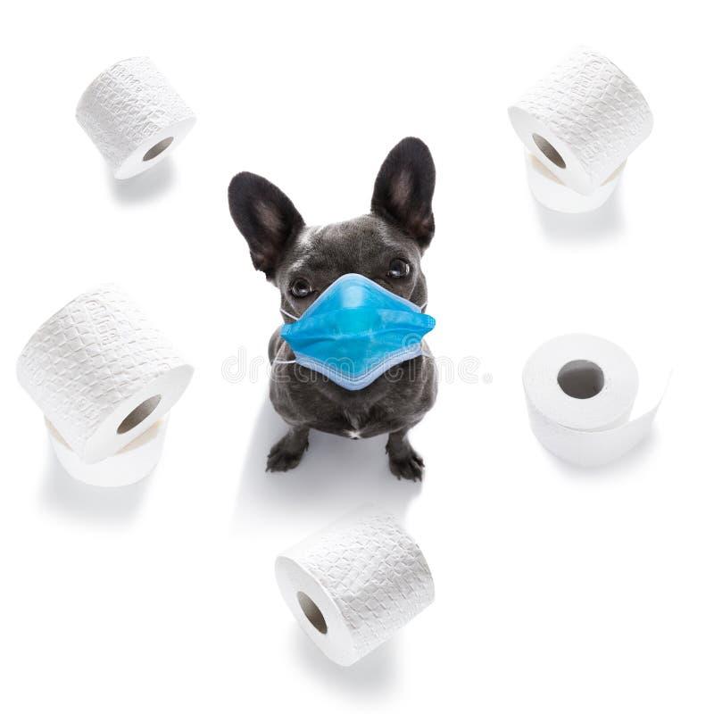 生病的狗,有病,有面罩,冠状病毒 图库摄影