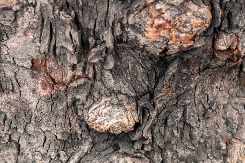 生节树被关闭由创造性的纹理和样式决定设计的 免版税库存照片