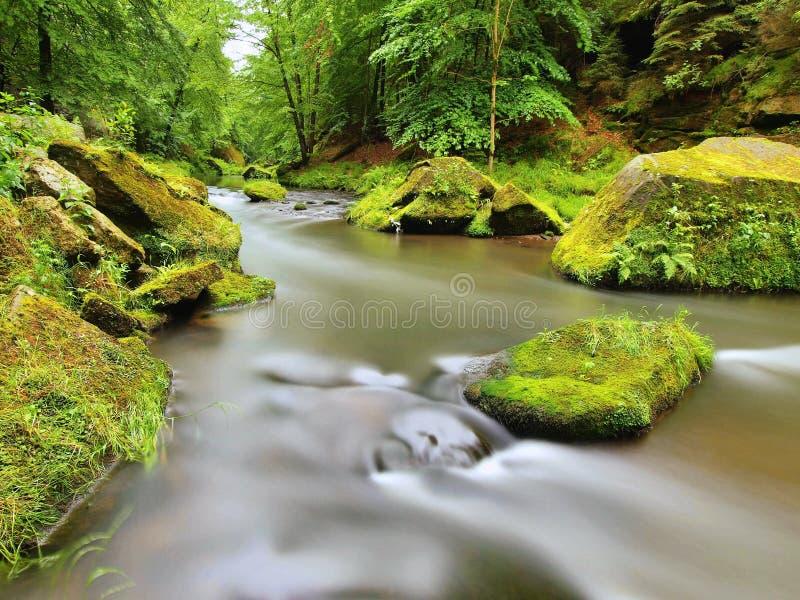 生苔冰砾在水中在山河的新鲜的绿色树下 库存图片