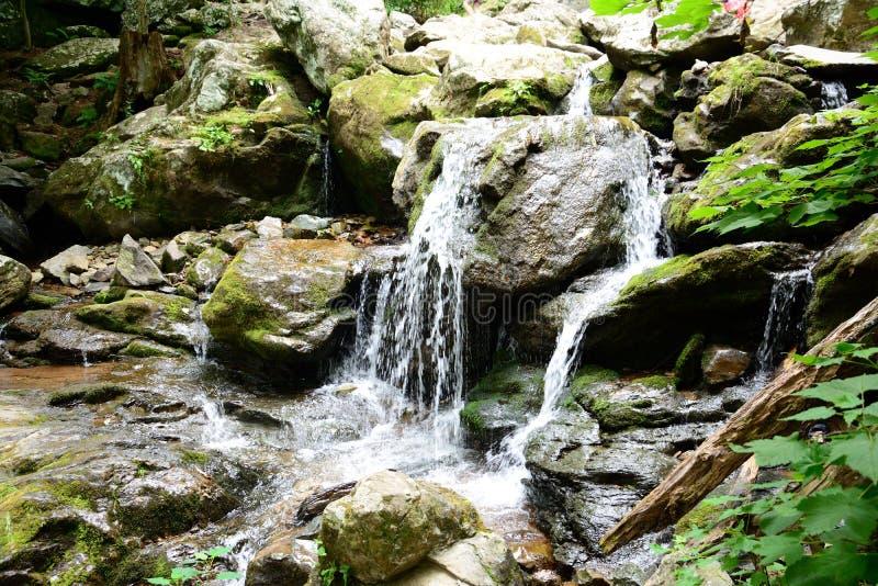 生苔在岩石瀑布 图库摄影
