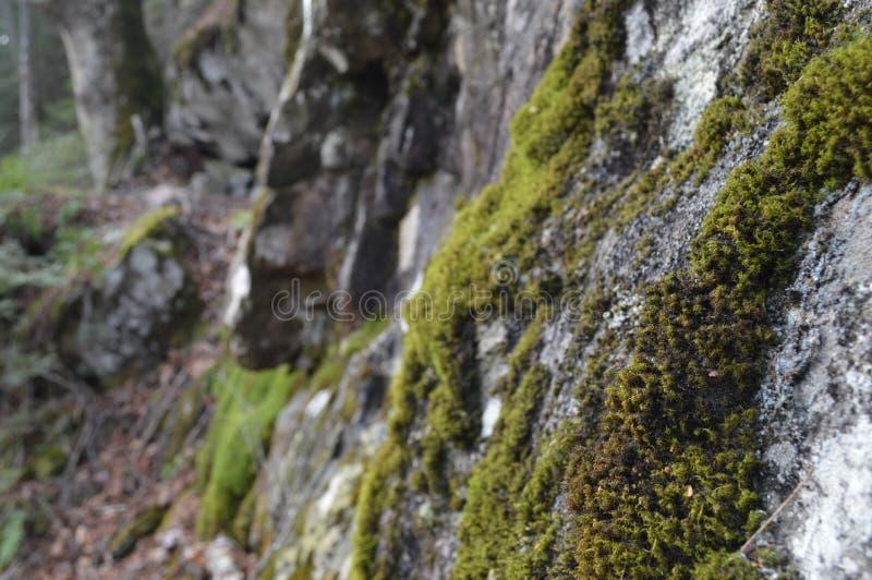 生苔巨石城在森林里 免版税库存图片