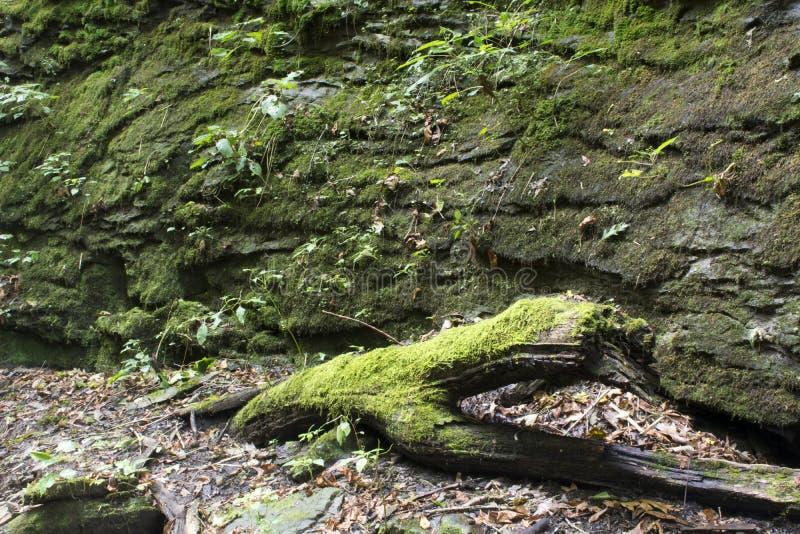 生苔日志和岩石墙壁 库存照片