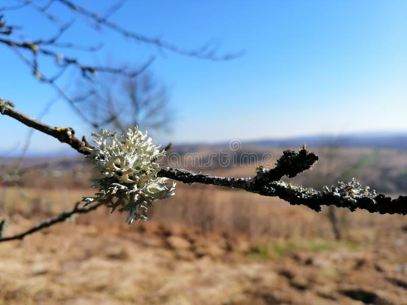 生苔枝杈 库存照片