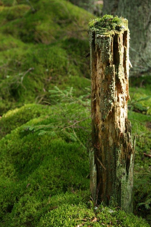 生苔树干 免版税库存照片