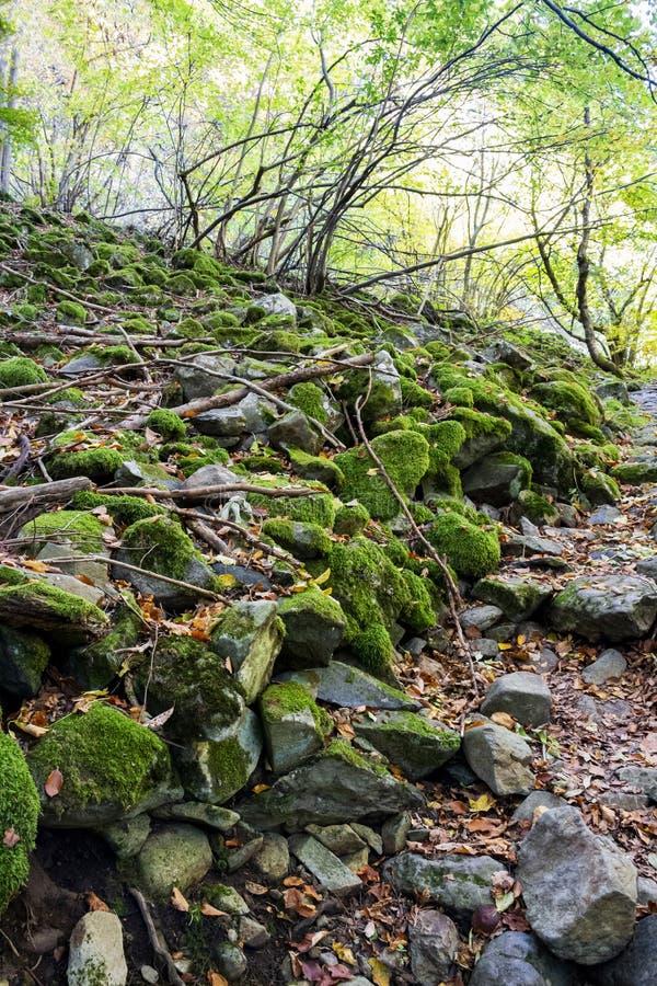 生苔石头,一条石河在秋天保加利亚山森林里 图库摄影