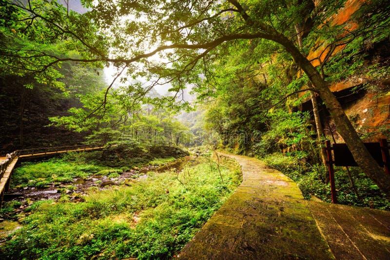 生苔石走道风景看法沿河的用清楚的水 图库摄影