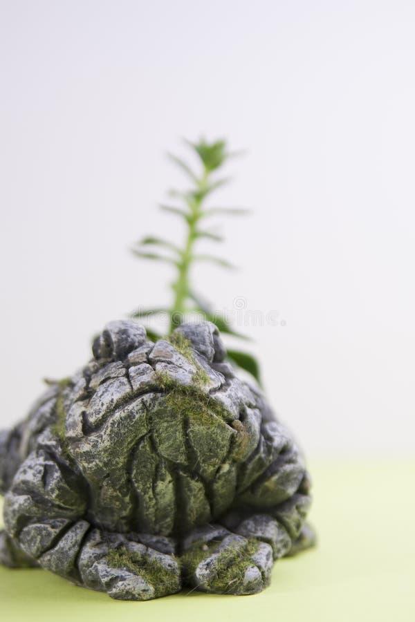 生苔石青蛙雕象用在焦点仙人掌外面 库存图片