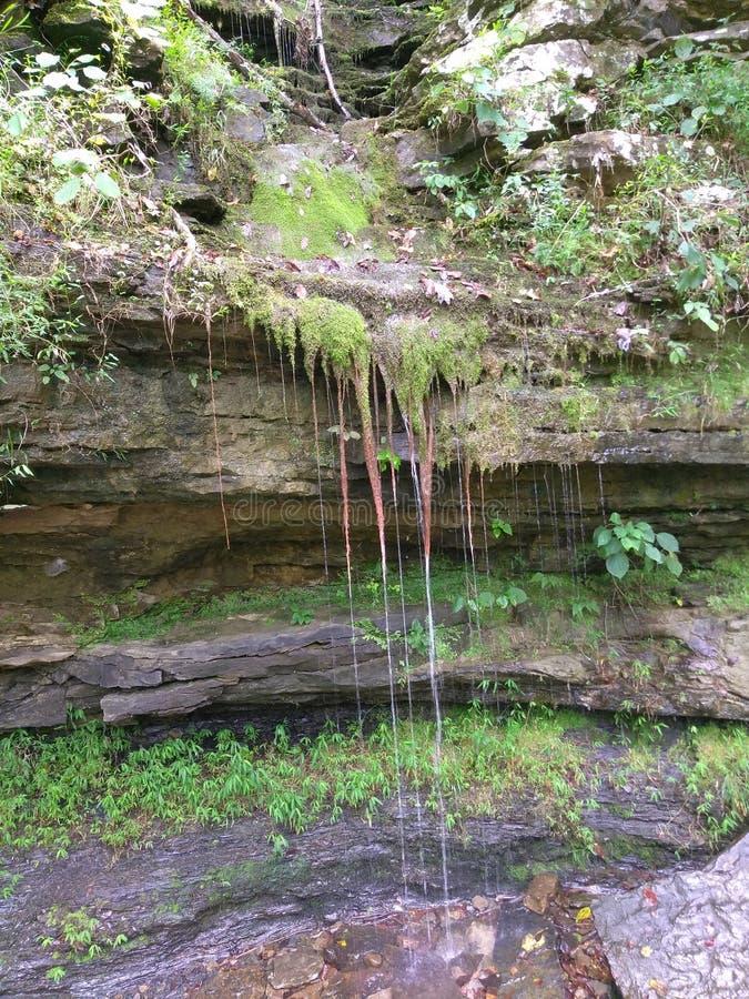 生苔被烘干瀑布 库存图片