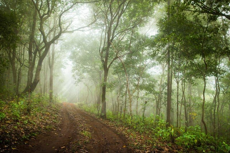 生苔雨林,软的焦点 免版税库存照片