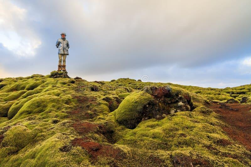 生苔风景冰岛 库存图片