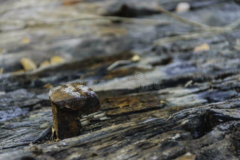 生锈的铁路钉 免版税库存照片