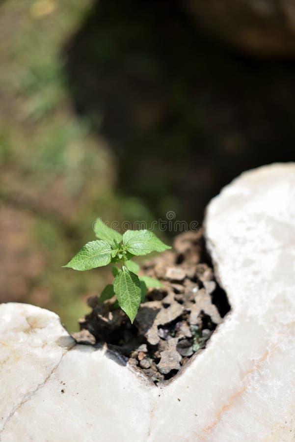生长从与阳光的一个岩石的一棵小植物 库存照片
