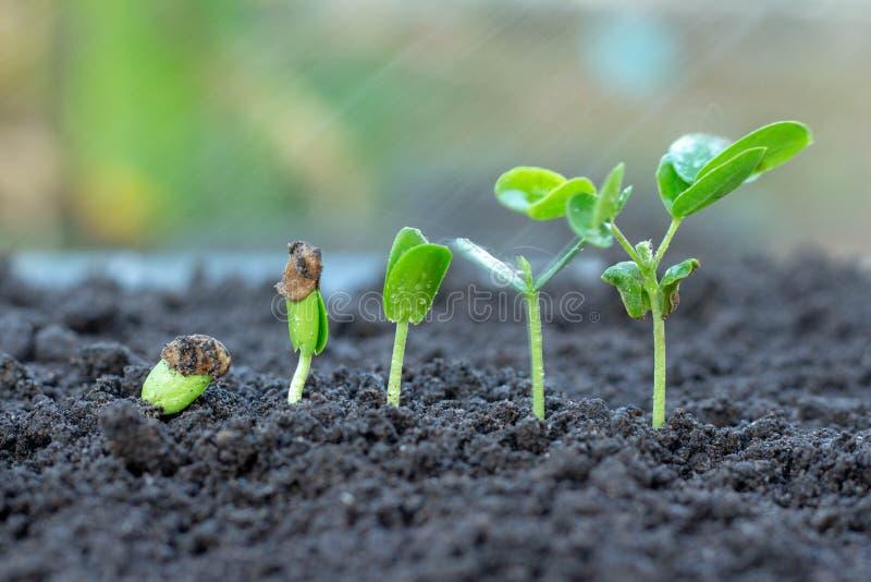 生长从地面的树苗 免版税库存照片