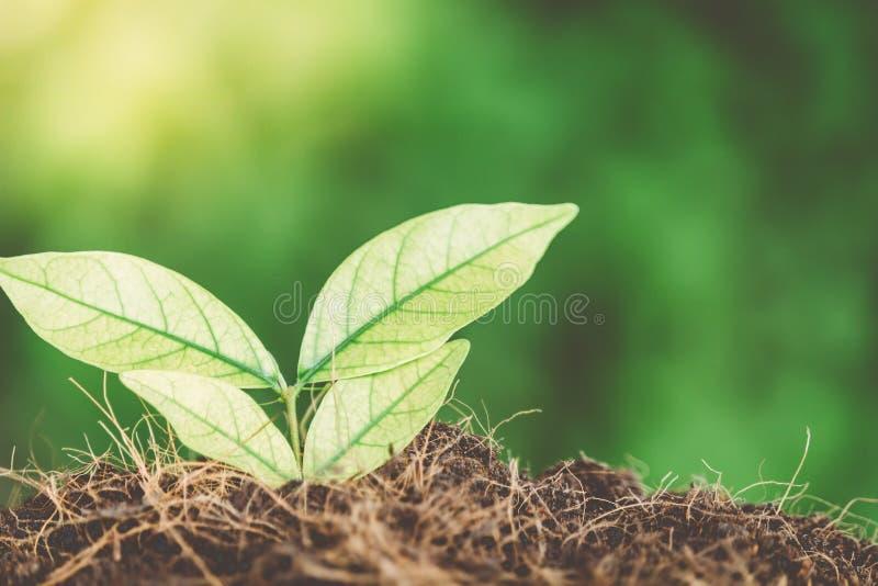 生长从种子的绿色新芽 库存图片